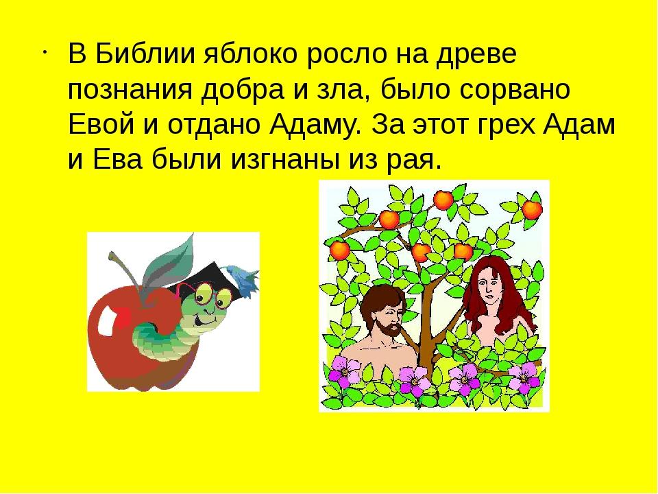 В Библии яблоко росло на древе познания добра и зла, было сорвано Евой и отда...
