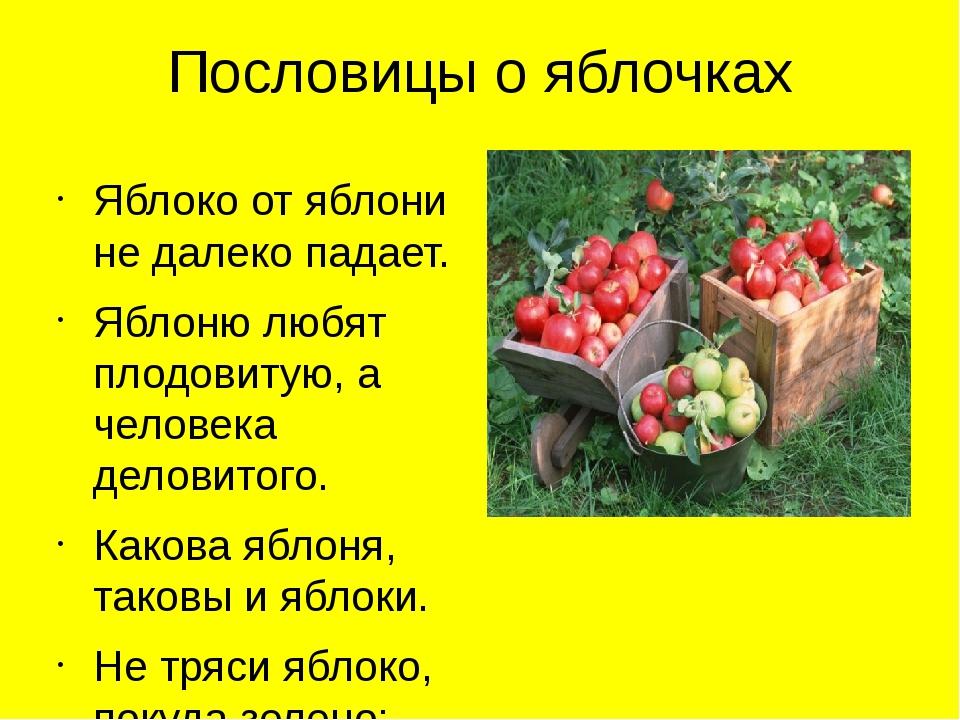 Пословицы о яблочках Яблоко от яблони не далеко падает. Яблоню любят плодовит...