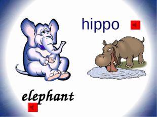 elephant hippo