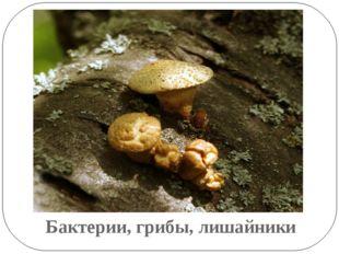 Бактерии, грибы, лишайники