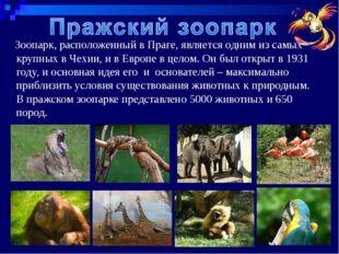 Зоопарк, расположенный вПраге, является одним из самых крупных в Чехии, и в