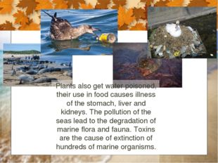Plants also get water poisoned, their use in food causes illness of the stoma