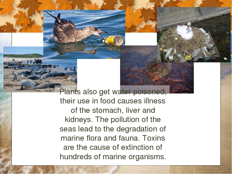 Plants also get water poisoned, their use in food causes illness of the stoma...