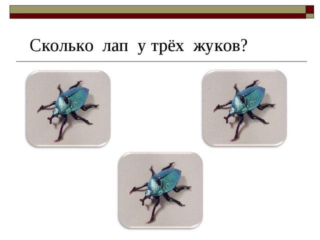 Сколько лап у трёх жуков?