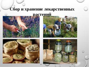 Сбор и хранение лекарственных растений