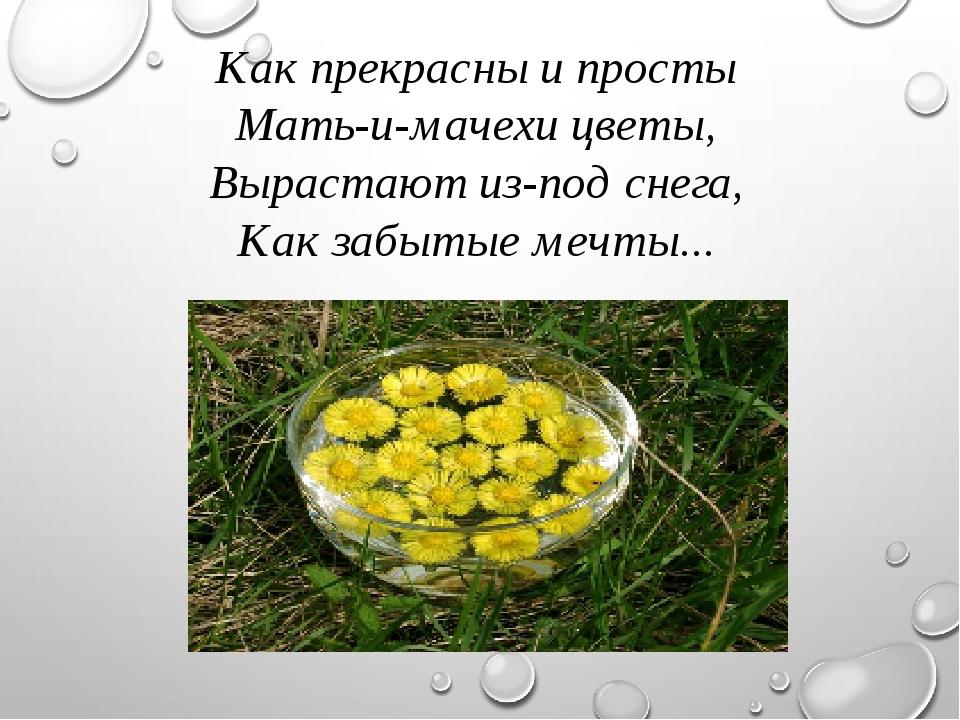 Как прекрасны и просты Мать-и-мачехи цветы, Вырастают из-под снега, Как забыт...