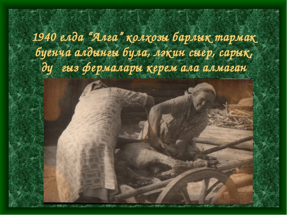 """1940 елда """"Алга"""" колхозы барлык тармак буенча алдынгы була, ләкин сыер, сары..."""