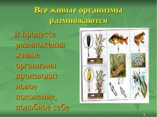 Все живые организмы размножаются В процессе размножения живые организмы произ