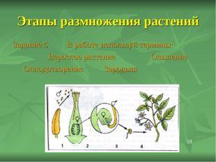Этапы размножения растений Задание 5 В работе используй термины: Взрослое рас