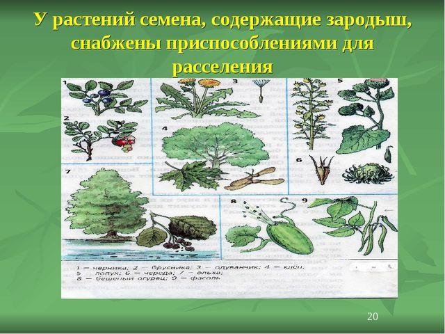 У растений семена, содержащие зародыш, снабжены приспособлениями для расселен...