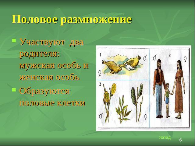 Половое размножение Участвуют два родителя: мужская особь и женская особь Обр...