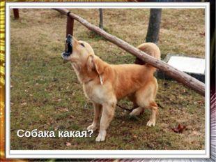 Собака какая?