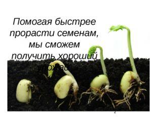 Помогая быстрее прорасти семенам, мы сможем получить хороший урожай