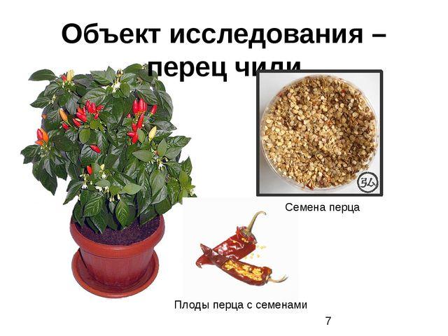 Объект исследования – перец чили Семена перца Плоды перца с семенами