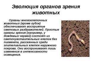 Эволюция органов зрения животных Органы многоклеточных животных (кроме губок)