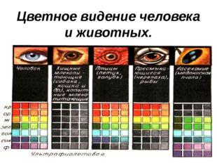 Цветное видение человека и животных.