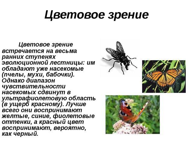 Цветовое зрение Цветовое зрение встречается на весьма ранних ступенях эволюци...