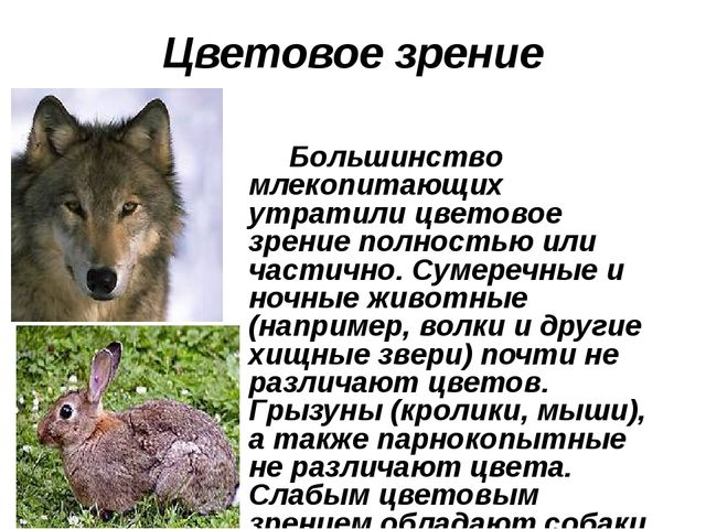 Цветовое зрение Большинство млекопитающих утратили цветовое зрение полностью...