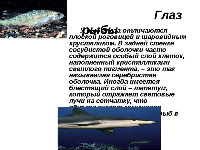 Глаз рыбы У рыб глаза отличаются плоской роговицей и шаровидным хрусталиком....