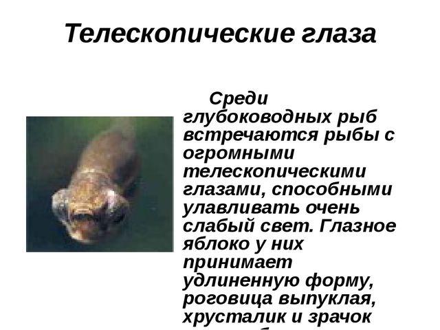 Телескопические глаза Среди глубоководных рыб встречаются рыбы с огромными те...