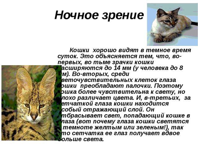 Ночное зрение Кошки хорошо видят в темное время суток. Это объясняется тем,...