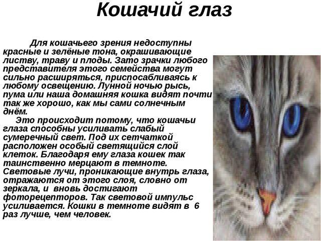 Кошачий глаз Для кошачьего зрения недоступны красные и зелёные тона, окрашива...