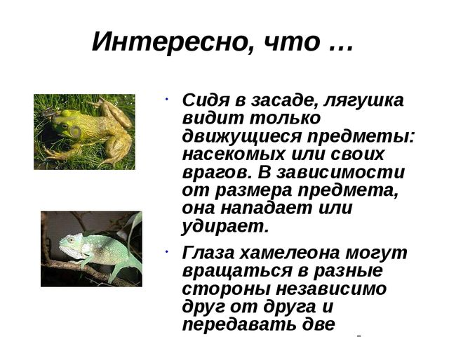 Интересно, что … Сидя в засаде, лягушка видит только движущиеся предметы: нас...