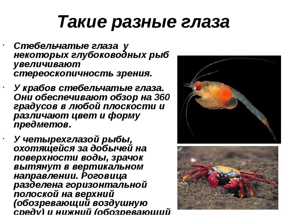 Такие разные глаза Стебельчатые глаза у некоторых глубоководных рыб увеличива...