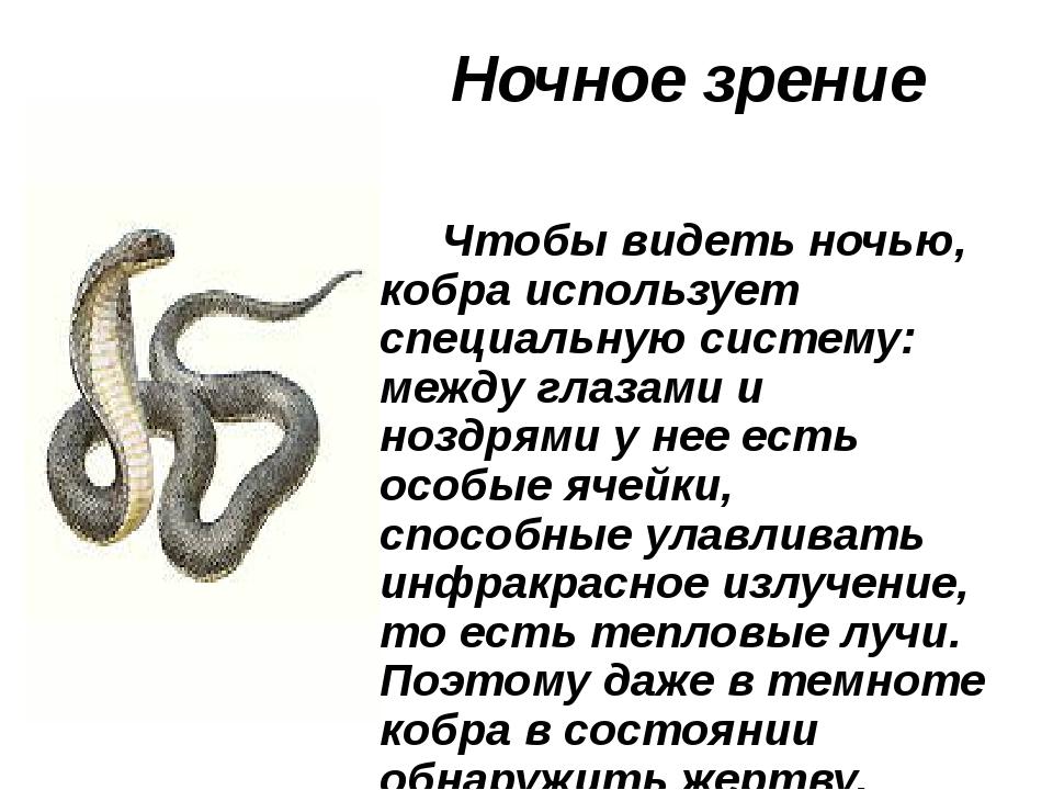 Ночное зрение Чтобы видеть ночью, кобра использует специальную систему: межд...