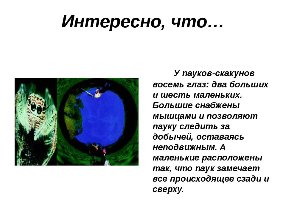 Интересно, что… У пауков-скакунов восемь глаз: два больших и шесть маленьких....