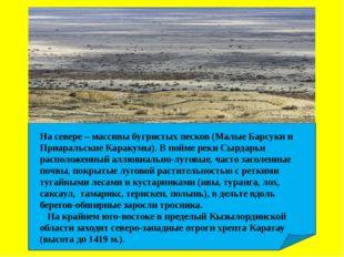 На севере – массивы бугристых песков (Малые Барсуки и Приаральские Каракумы)