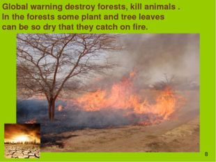 Global warning destroy forests, kill animals . In the forests some plant and