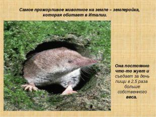 Самое прожорливое животное на земле – землеройка, которая обитает в Италии.