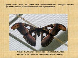 кроме того, есть на земле еще бабочка-геркулес, которая своими крыльями может