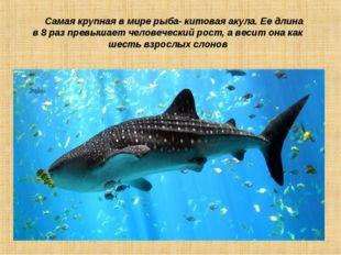 Самая крупная в мире рыба- китовая акула. Ее длина в 8 раз превышает человеч