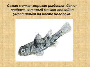 Самая мелкая морская рыбешка- бычок пандака, который может спокойно уместитьс