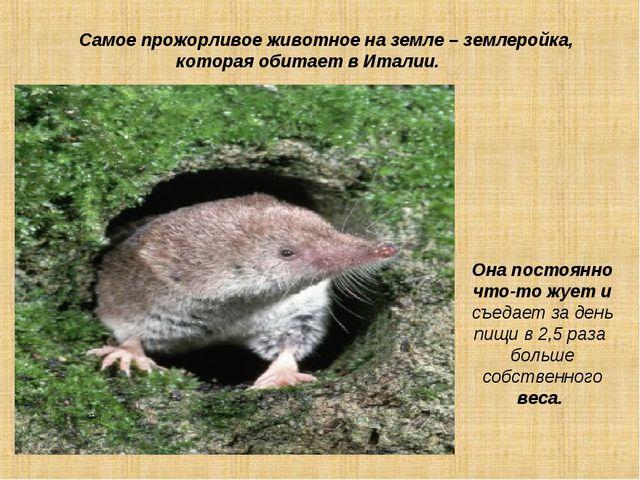 Самое прожорливое животное на земле – землеройка, которая обитает в Италии....
