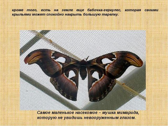 кроме того, есть на земле еще бабочка-геркулес, которая своими крыльями может...