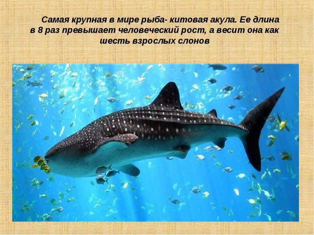 Самая крупная в мире рыба- китовая акула. Ее длина в 8 раз превышает человеч...