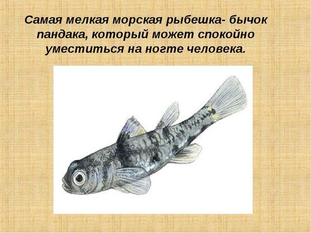 Самая мелкая морская рыбешка- бычок пандака, который может спокойно уместитьс...