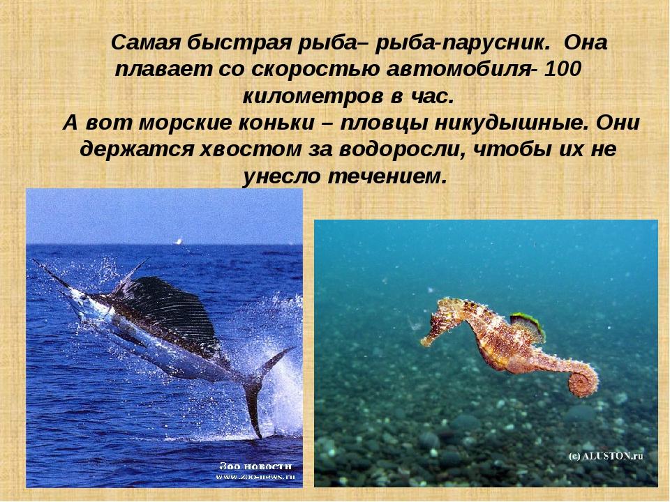Самая быстрая рыба– рыба-парусник. Она плавает со скоростью автомобиля- 100...