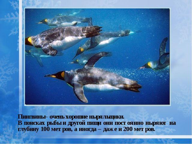 Пингвины– очень хорошие ныряльщики. В поисках рыбы и другой пищи они постоянн...