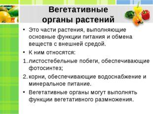 Вегетативные органырастений Это части растения, выполняющие основные функции