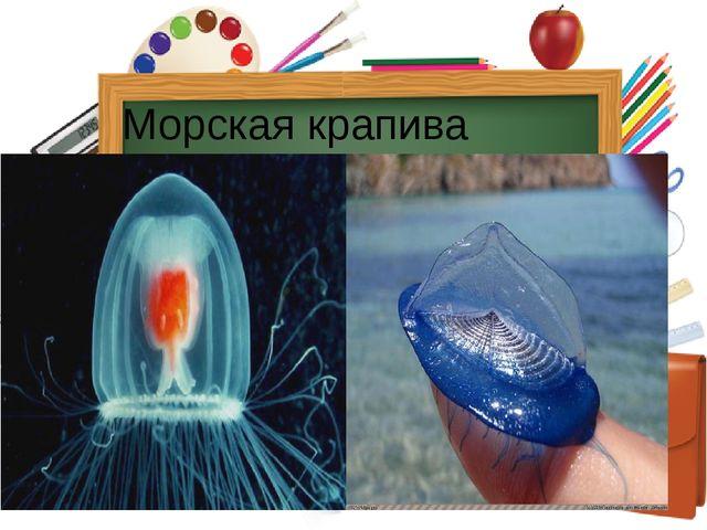 Морская крапива Гидроидные медузы