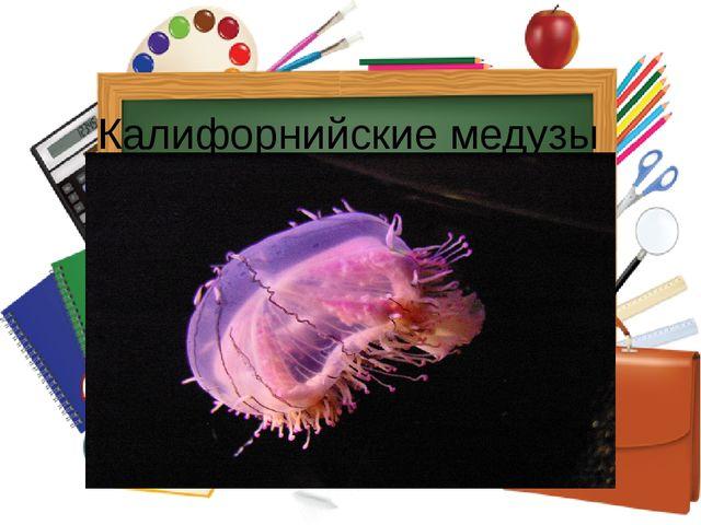 Калифорнийские медузы
