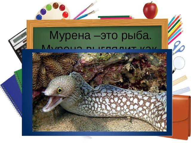 Мурена –это рыба. Мурена выглядит как змея, умеет хорошо кусаться.