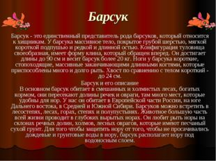 Барсук Барсук - это единственный представитель рода барсуков, который относит