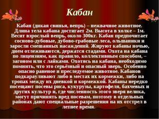 Кабан Кабан (дикая свинья, вепрь) – нежвачное животное. Длина тела кабана дос