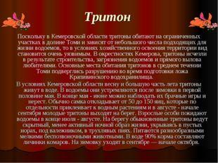 Тритон Поскольку в Кемеровской области тритоны обитают на ограниченных участ