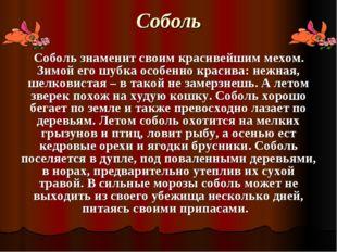 Соболь Соболь знаменит своим красивейшим мехом. Зимой его шубка особенно крас